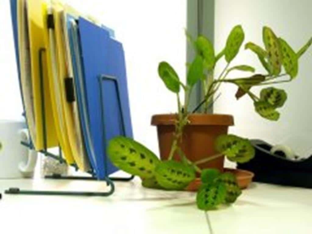 assistance administrative-secrétariat-saisie